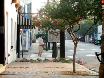 Tree steward pruning trees in Church Hill