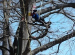 The climber moves in the tree to complete tasks