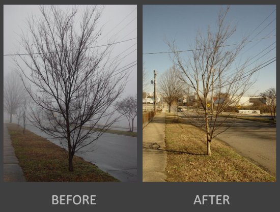 before after chinese elm