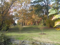 Joseph Bryan Park: Beautiful trees in all seasons