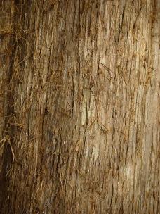 Juniperus virginiana, eastern red cedar - light red-brown, peeling, thin, fibrous